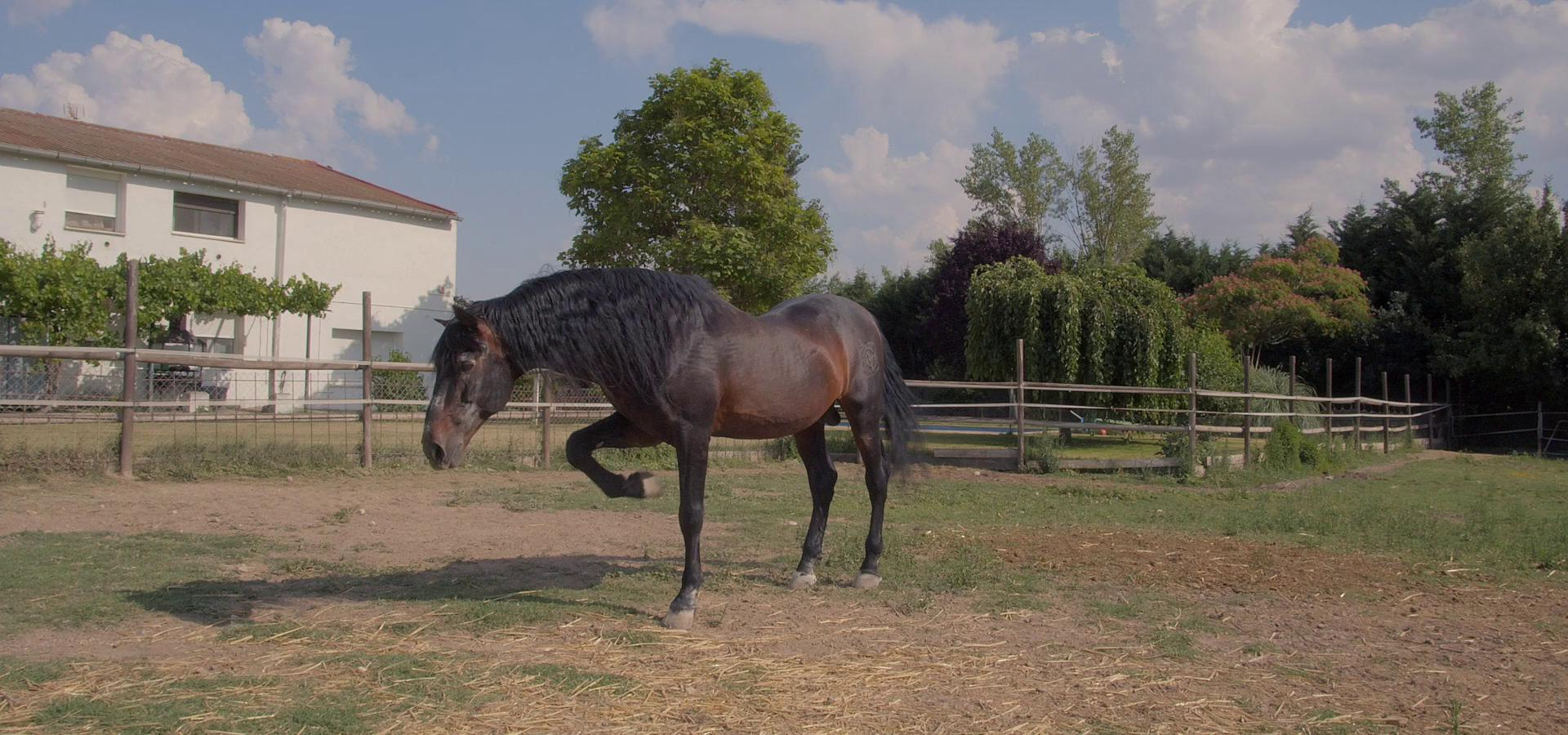 Vbackground_caballos